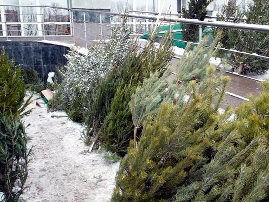 ...целью которых является предотвращение незаконной вырубки и сбыта хвойных деревьев, торговли в запрещенных местах.