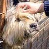Репортаж изприюта домашних животных вОдинцовском районе, Приют для домашних животных, приют для собак, собачий приют