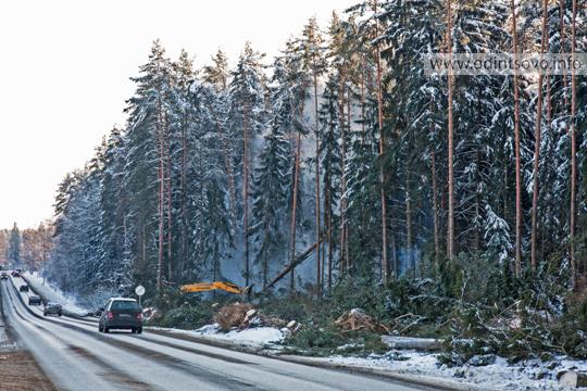 Лес, строительство дороги