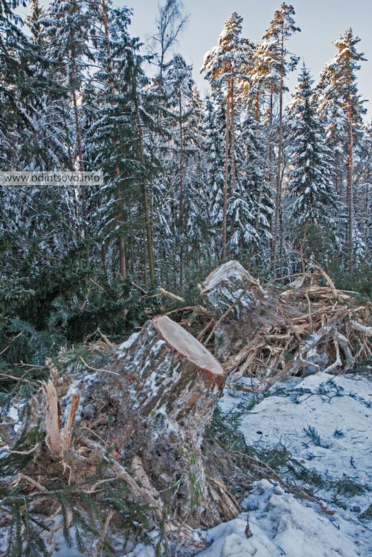Успенское шоссе, Подушкинский лес