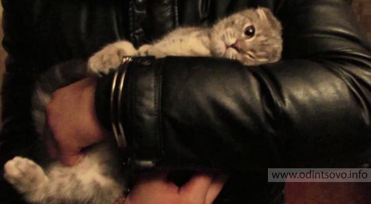 Кот наркодилера растрогал полицейских