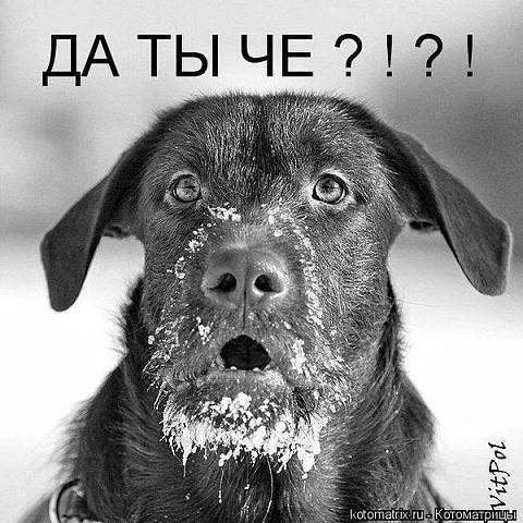 https://odintsovo.info/img/blog-new/2016/14178/TyChO--tn2.jpg
