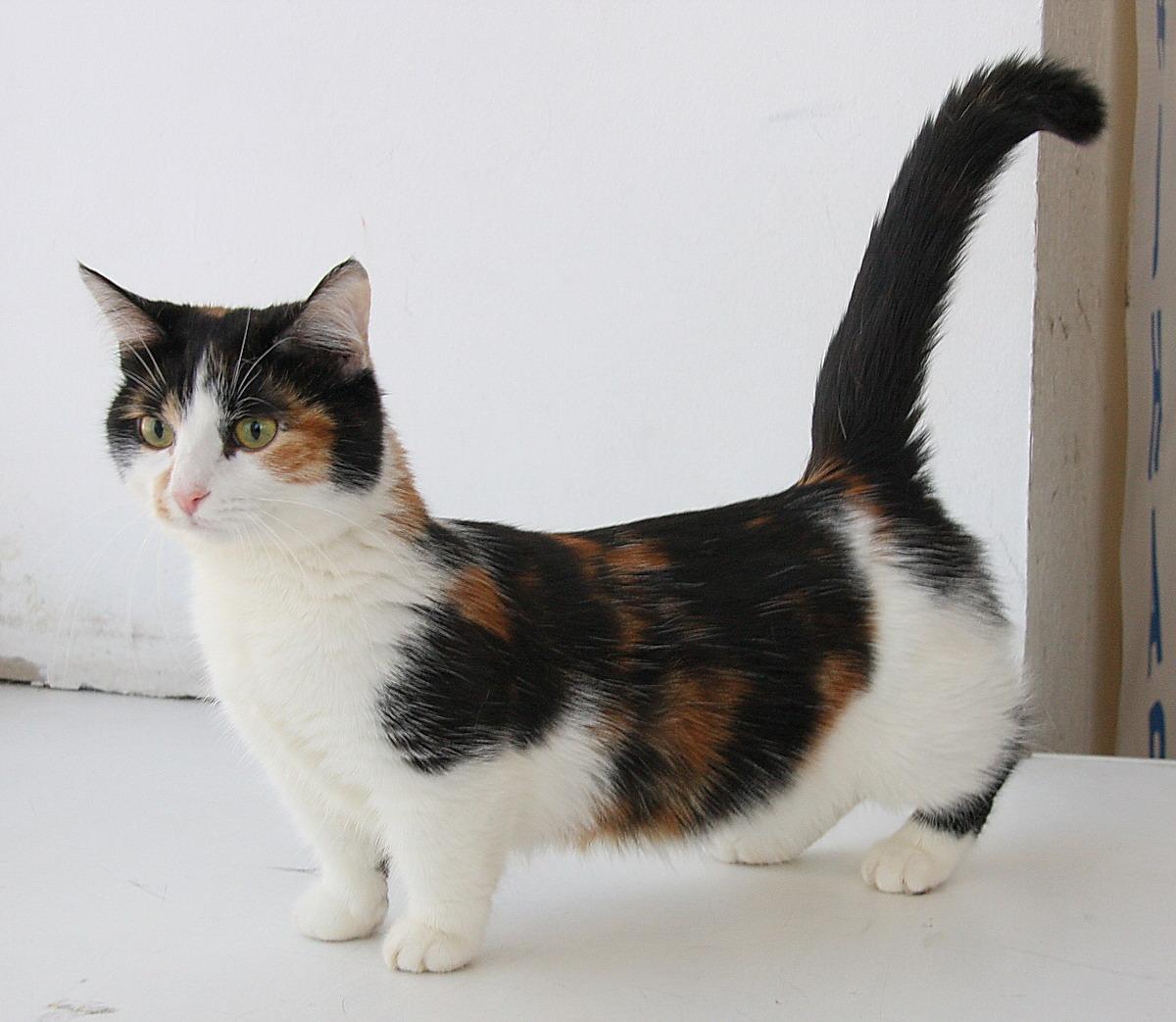 Фото пестрой кошки кот отжал