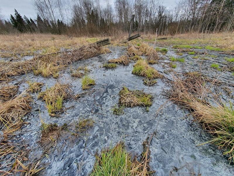 Это фекальное болото — земельные участки, выделенные для многодетных семей, Прорыв: фонтан говна затапливает многодетные семьи
