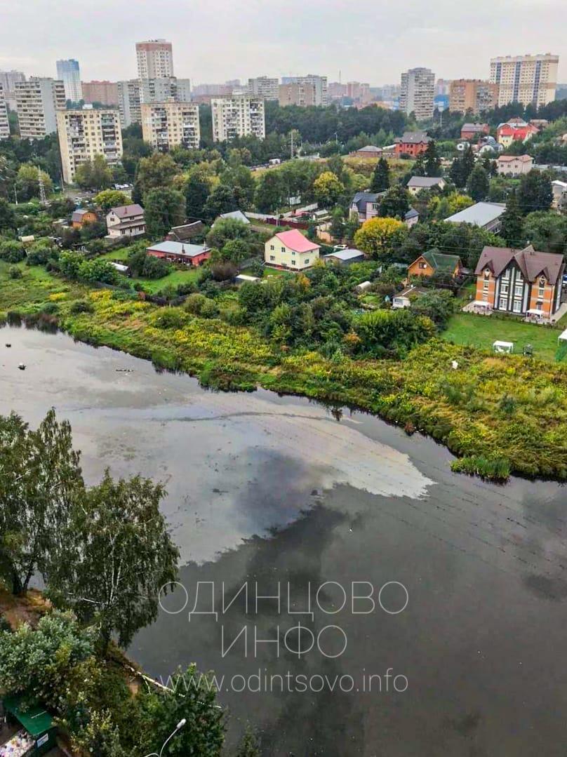 Плёнка из нефтепродуктов на Глазынинском пруду в Одинцово