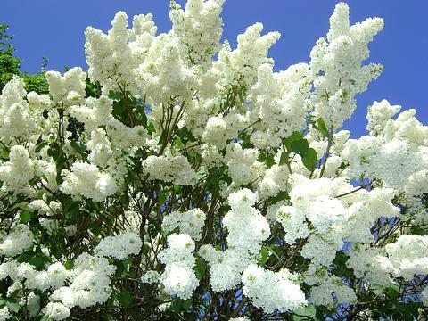 Красивые цветы цветковые растения